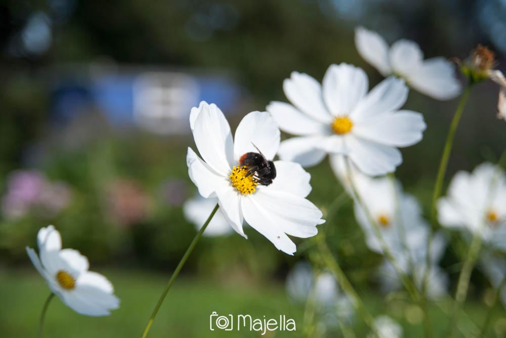 Fotografie Majella - Zomerschuur